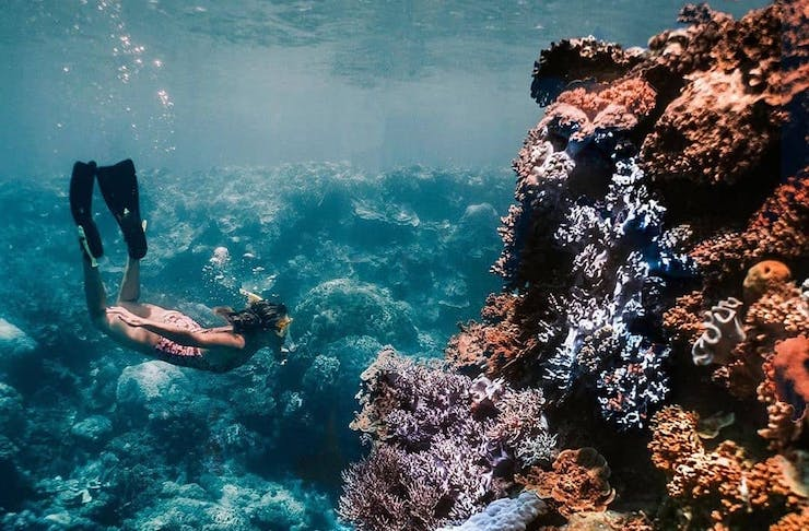 A woman dives beneath the waves with vibrant coral gardens.
