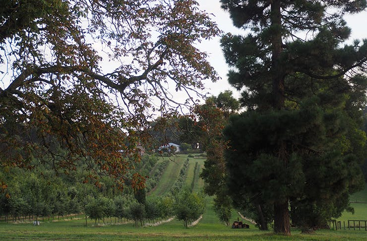 A shot of the lush-green farm with trees and an old tractor.