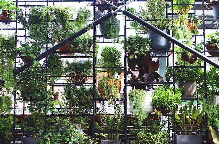 best urban gardens brisbane