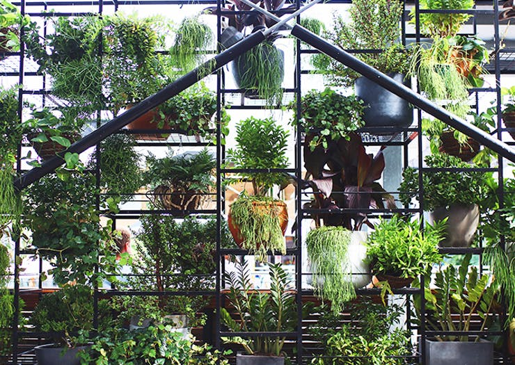 8 Insta-Worthy Urban Gardens To Chill Out In