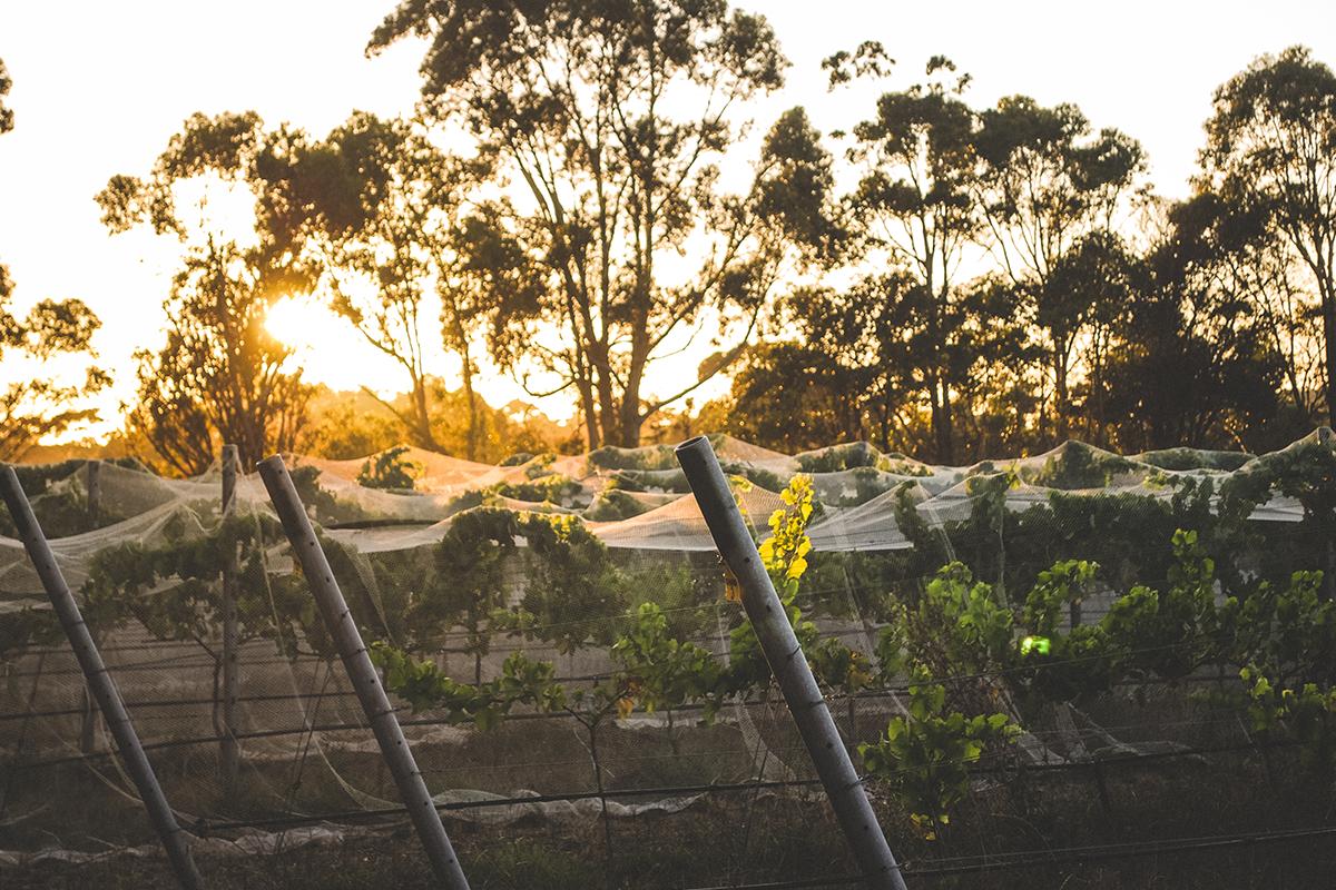 Voyager Estate at sunset