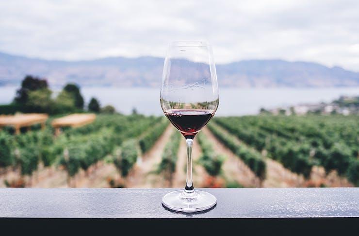 gold coast winery