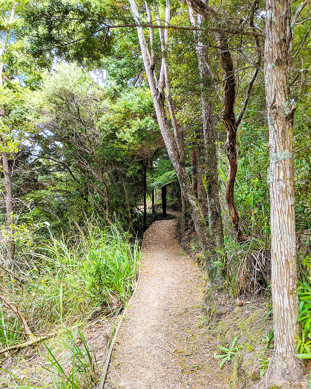 A track through the bush on Waiheke Island.