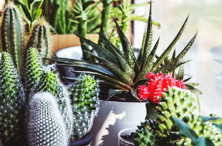 What Indoor Plant You Should Get Based On Your Star Sign