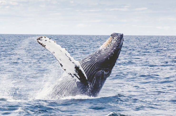Where To Go Whale Watching In Auckland