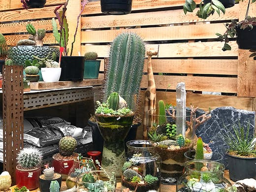 Where To Buy Pot Plants In Auckland Urban List Nz