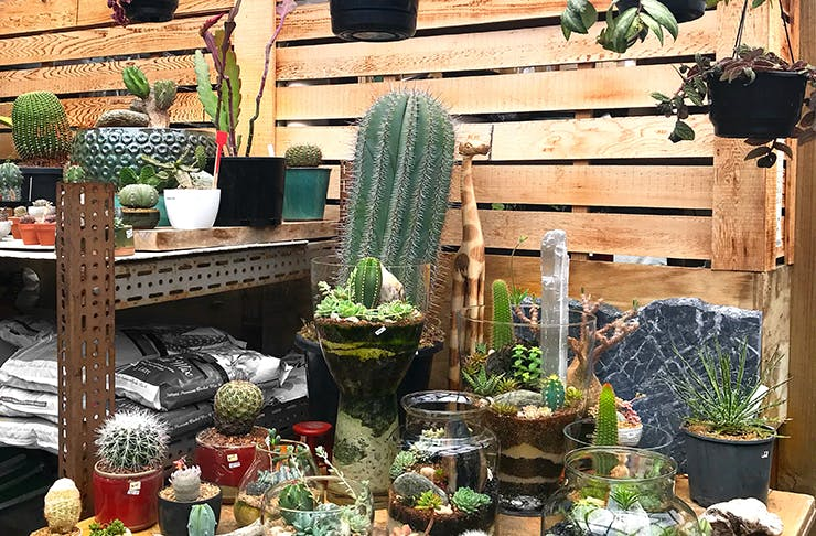Where To Buy Pot Plants In Auckland
