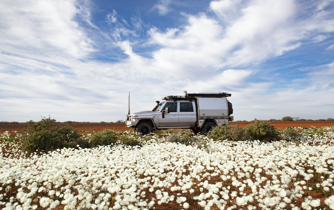 A 4WD sits on the road behind a field of flowers