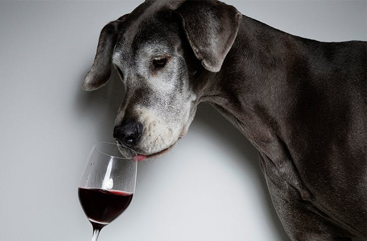 PSA: We've Found Wine Tours You Can Do With Your Dog!