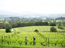 A 16-Day Festival Celebrating Wine And Winter Is Taking Over The Yarra Valley This Month