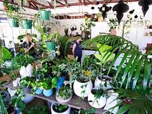 Where To Buy Indoor Plants In Perth