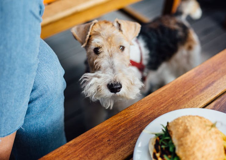 There's A Tiny Dog Festival On In Melbourne This Weekend