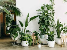 Green Up Your Home With These Perth Plant Delivery Services