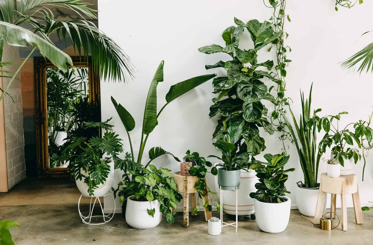 Green Assembly Indoor Plant Delivery perth