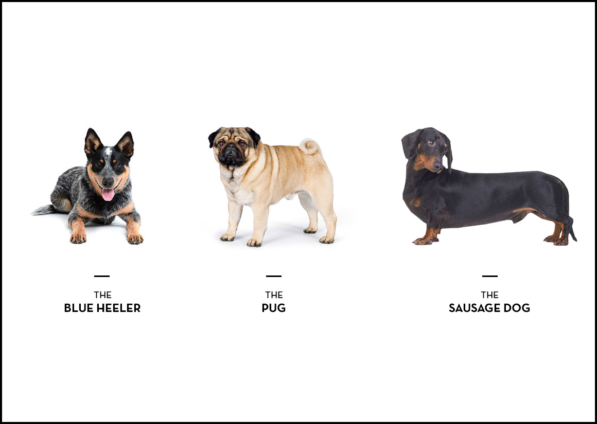 What Your Dog Breed Says About You