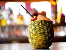 Exotic Pets Presents | Gold Coast Gets A New Pop-up Bar For Summer