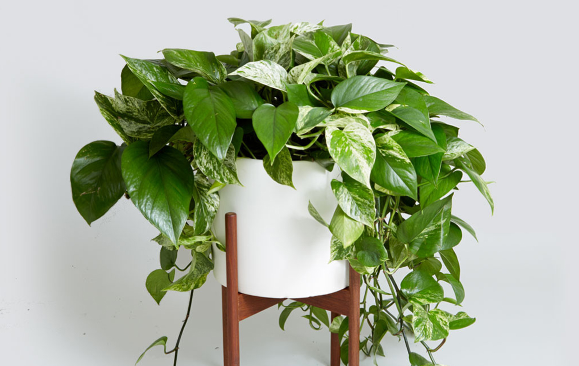 8 Super Cute Indoor Plants To Buy Now Sunshine Coast