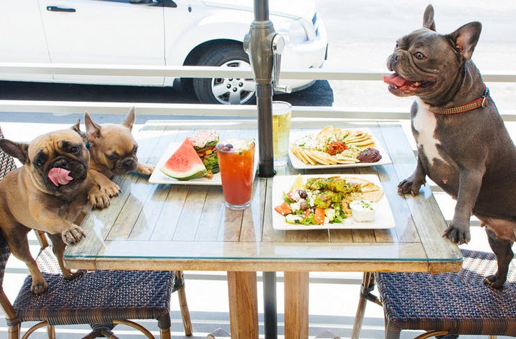 10 of the Best Dog-Friendly Cafes on the Gold Coast | Gold Coast