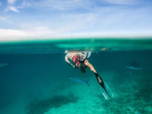 Best Snorkelling On And Around The Sunshine Coast   Sunshine