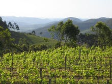 Escape To The Vineyards At These Stunning Wineries On And Around The Sunshine Coast