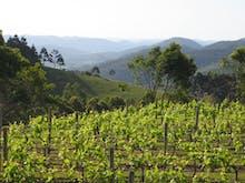 8 Stunning Wineries On & Around The Sunshine Coast
