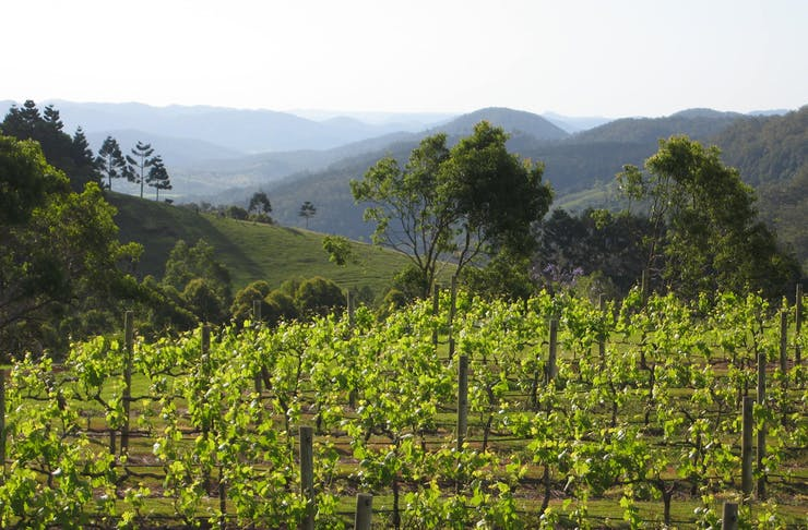 A vineyard overlooking valleys on the Sunshine Coast, Queensland.