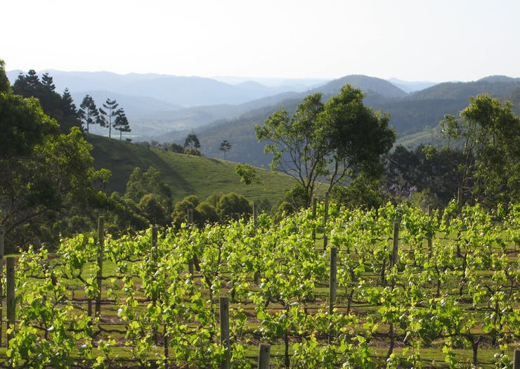 8 Stunning Wineries On & Around The Sunshine Coast