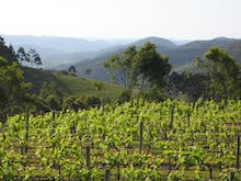 Grab A Designated Driver, Here Are 8 Stunning Wineries Within Driving Distance Of The Gold Coast