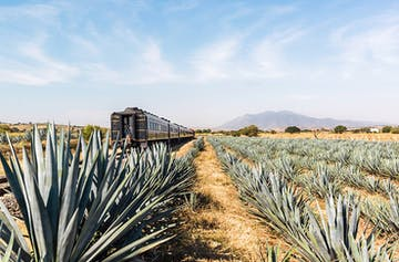 All Aboard Mexico's All-You-Can-Drink Tequila Train