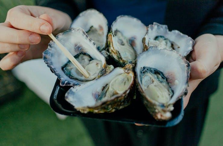 Oyster Festival Brisbane