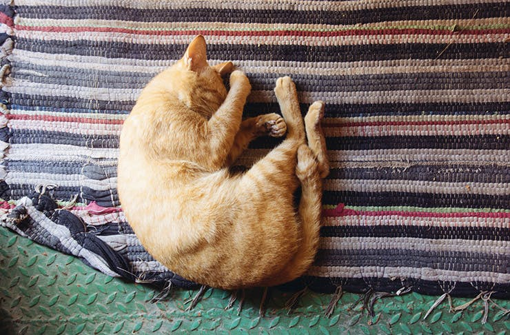 The Secret Art Of Napping
