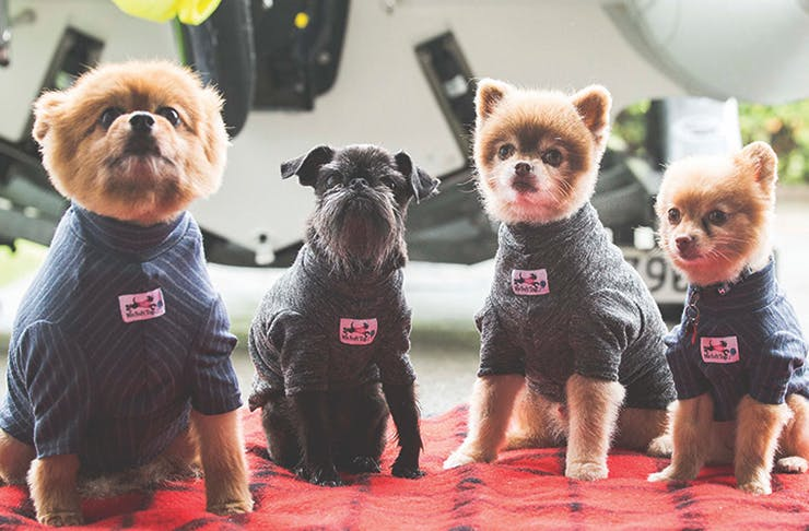 Auckland's Getting A Dog Pop-Up And It's All Sorts Of Adorable
