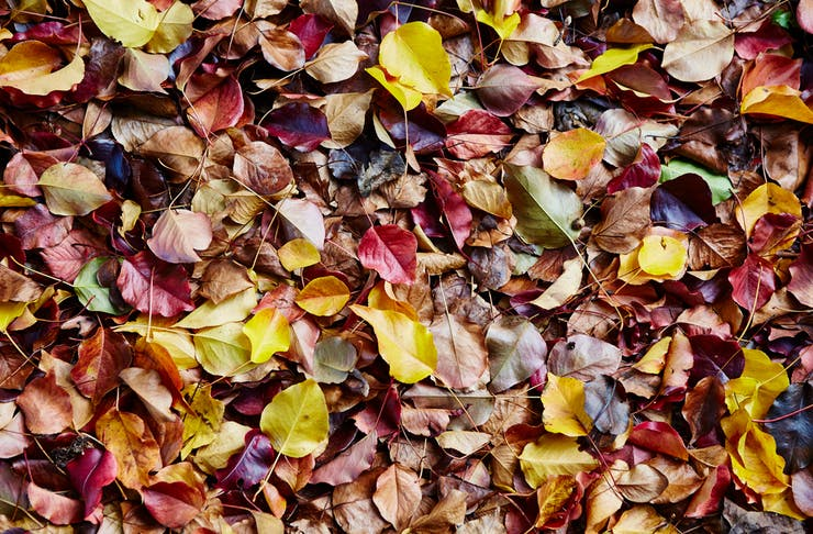 where to see autumn leaves near melbourne