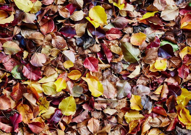 The Best Places To Check Out Autumn Leaves Near Melbourne