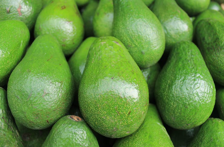 Avozillas Have Hit Sydney In Case You've Been Looking for 1.5kg Avos