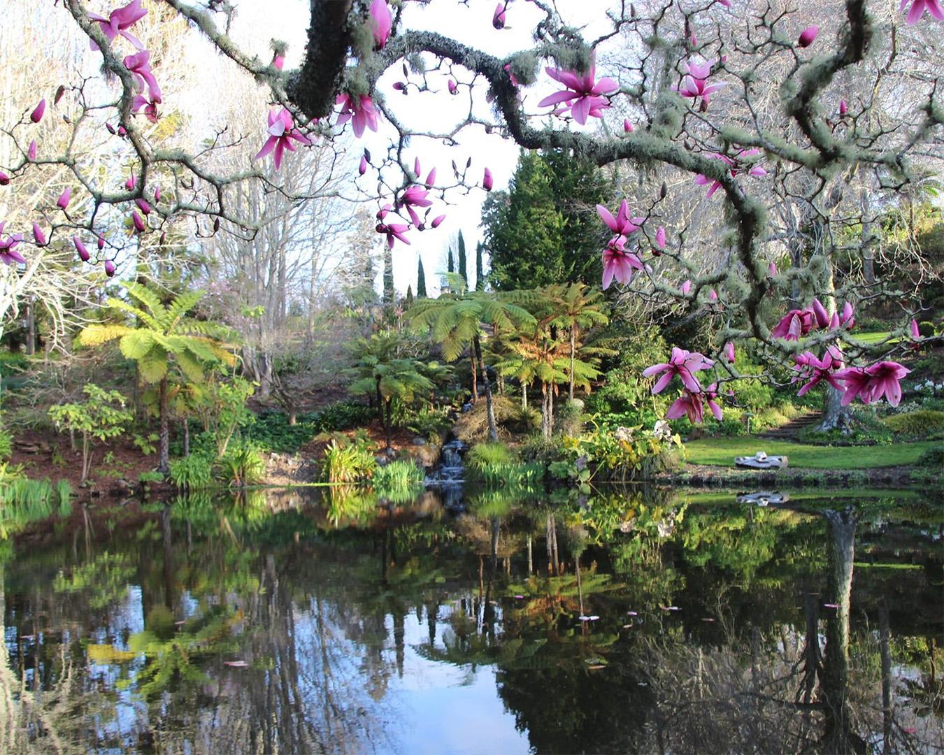 Beautiful flowers overlook a lake at Ayrlies Garden.