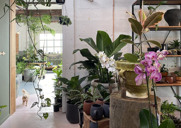 An Amazingly Lofty Plant Paradise Has Just Opened In St Heliers Village