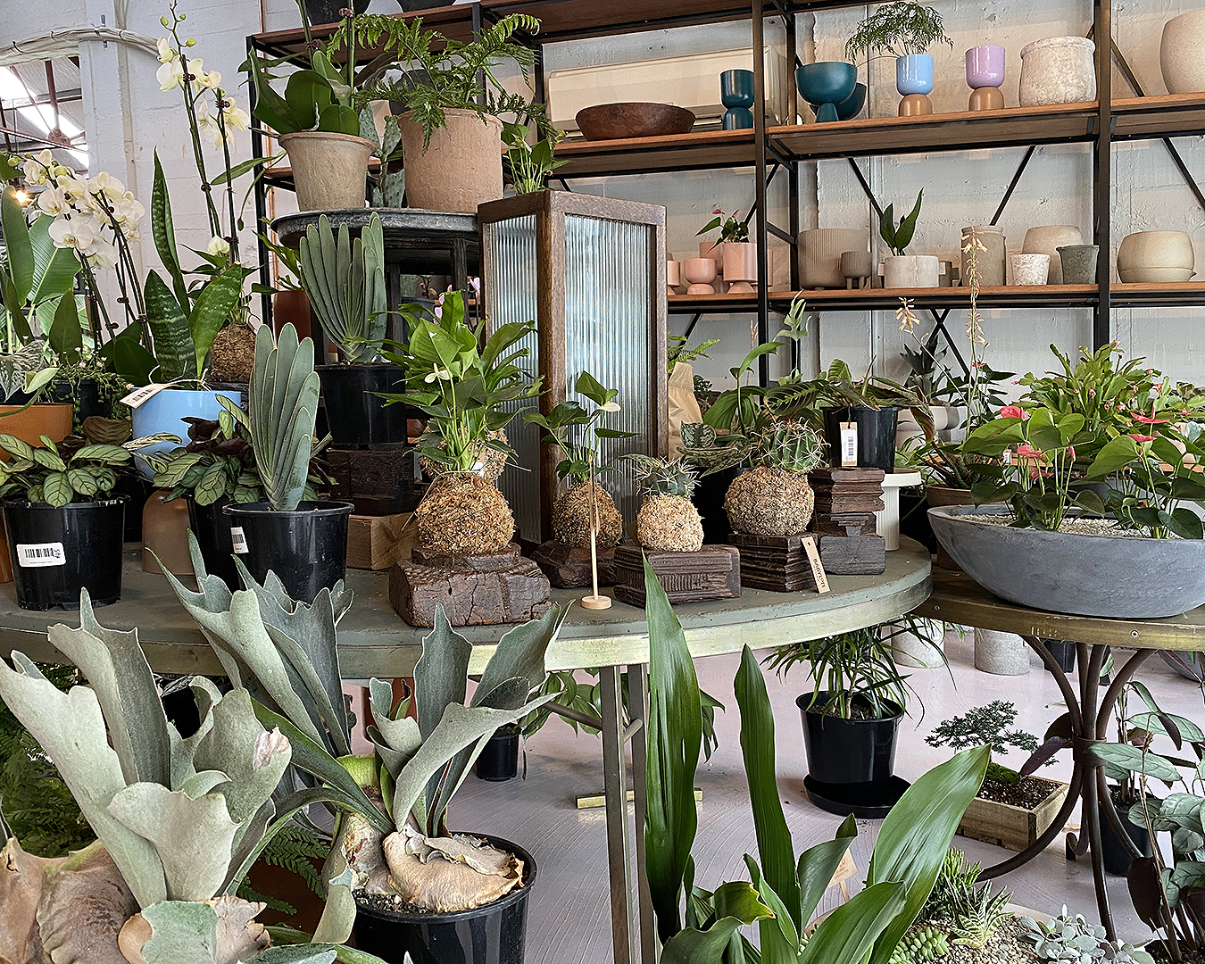Plants galore at Babylon Store.