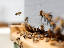 What You Need To Know About Melbourne's First-Ever Dedicated Bee School