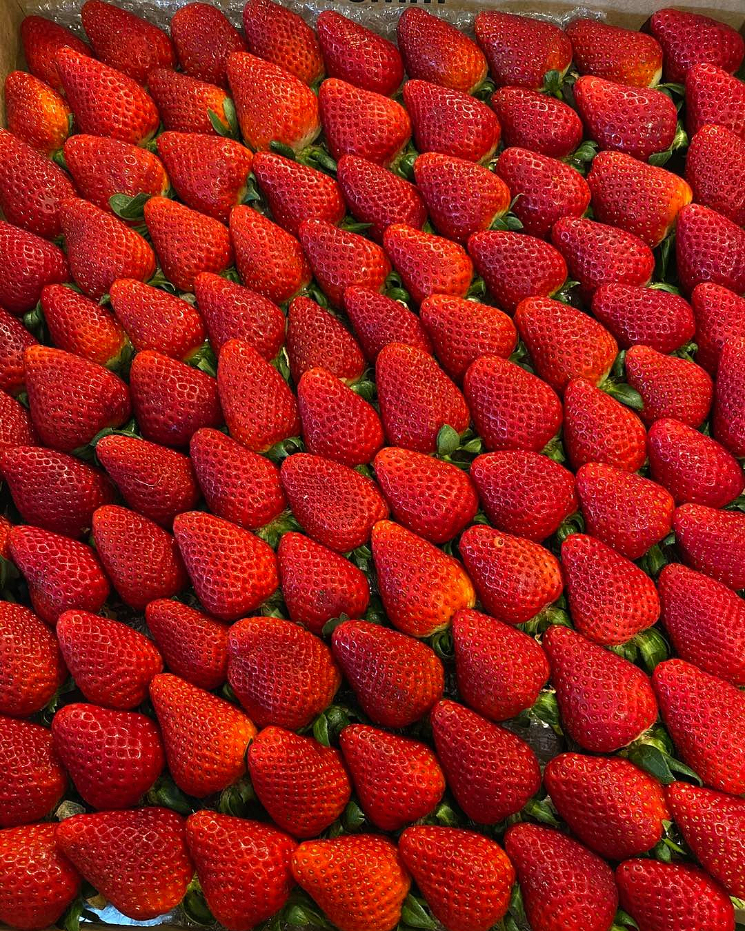 Strawberries upon strawberries at Bell's Berries