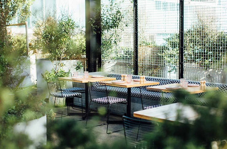 Best Cafes and Restaurants Auckland