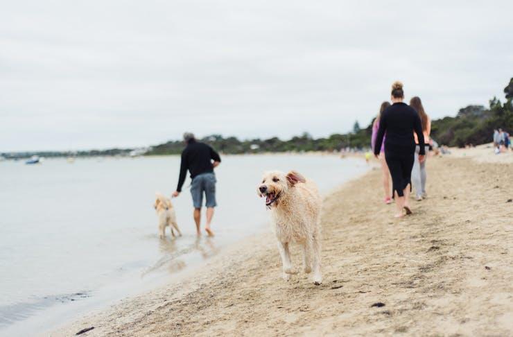 best-dog-beaches-melbourne