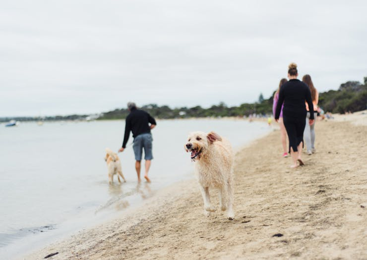 The Best Spots To Take Your Doggo For A Swim In Melbourne