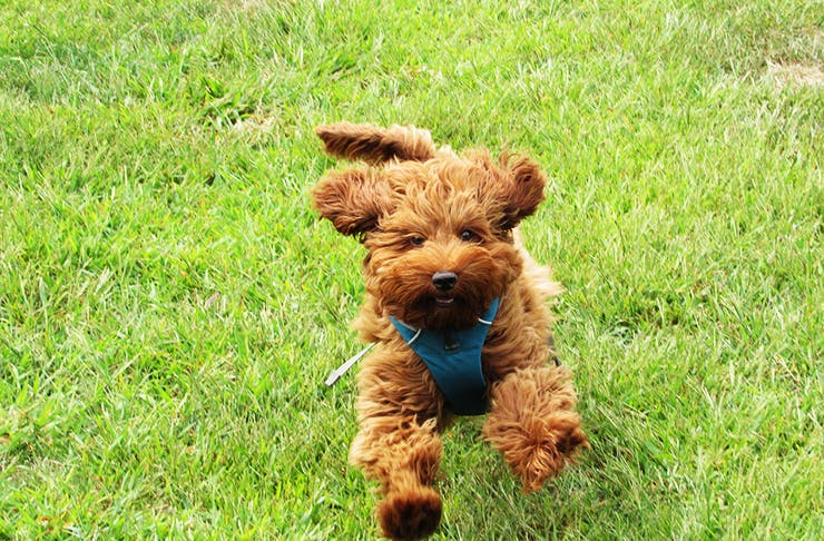 Dog-Friendly Picnic Spots In Brisbane