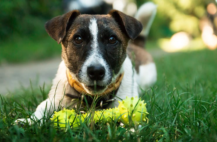 Where To Find Auckland's Best Dog Parks