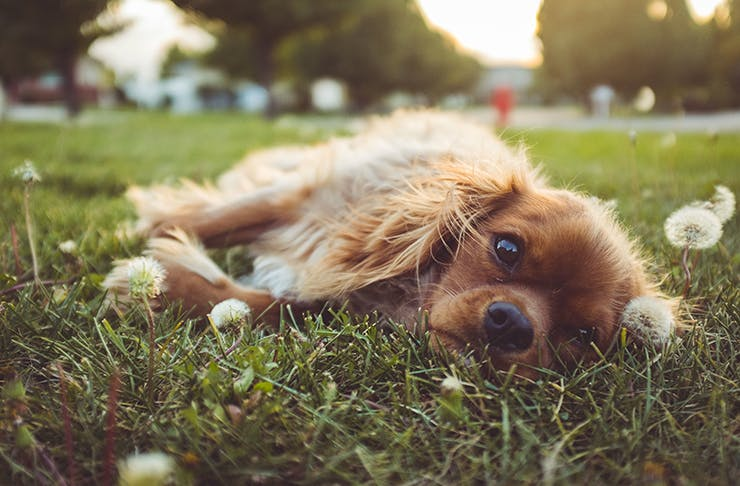 best dog parks brisbane