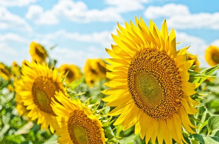 best-flower-walks-near-sydney