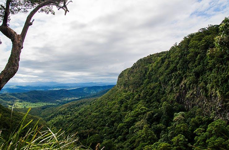 best hikes and trails brisbane, bush trails brisbane