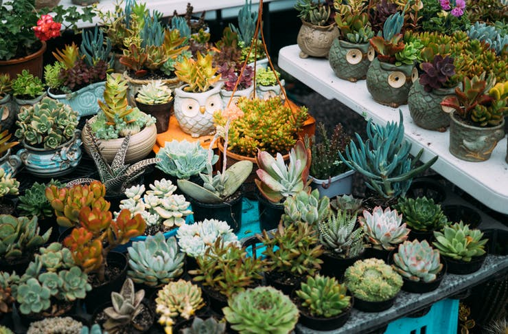 A market stall loaded with cute succulents.