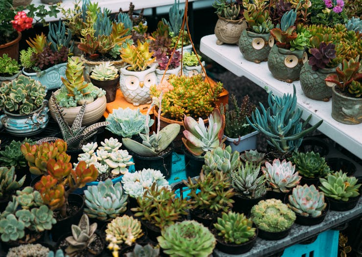 Stock Up On Plant Babies At This Weekend's Massive Warehouse Plant Sale
